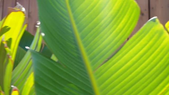 tropic plant detail - cespuglio tropicale video stock e b–roll