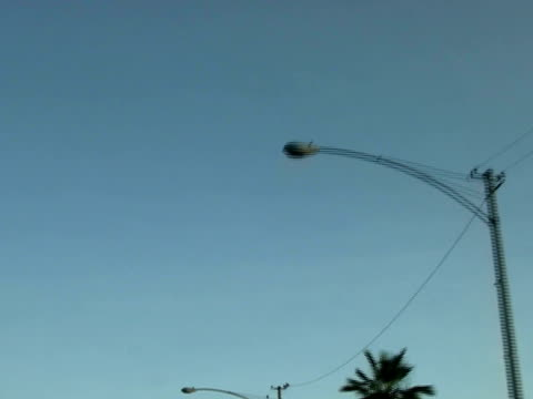 Tropical Abstract: Endless Palm Trees - High Speed Loop-able video