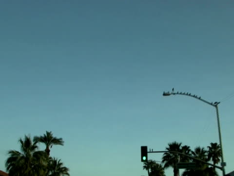 Tropical Abstract: Racing Past Palm Trees - High Speed Loop-able video