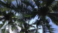 istock Tropical Atmosphere Under Coconut Palm Trees With Fresh Green Leaves On A Sunny Bright Blue Sky 1306957142
