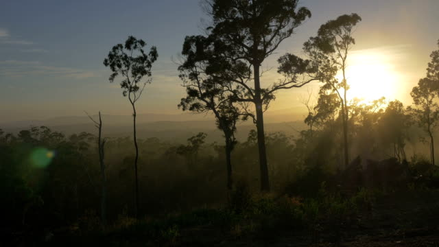 Tropical Australian Landscape at Sunrise video