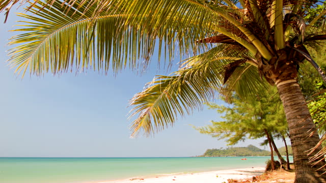Tropical beach and green lagoon video