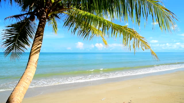 tropical beach and palm tree video