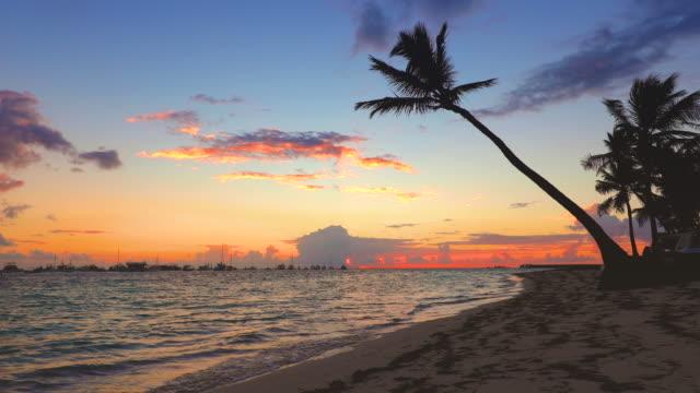 tropical beach at sunrise - palm tree filmów i materiałów b-roll