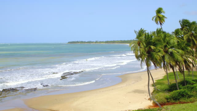 vídeos de stock, filmes e b-roll de praia tropical em alagoas, brasil - nordeste