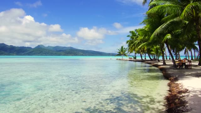 tropical beach in french polynesia travel, seascape and nature concept - tropical beach with palm trees in french polynesia pacific islands stock videos & royalty-free footage