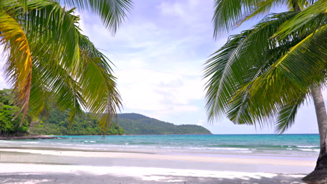 tropical beach. palm tree - exotic stock videos & royalty-free footage