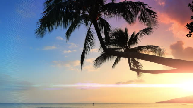 Tropical Beach Palm Trees Silhouette, Sun Lens Flare Exotic Beautiful Horizon video