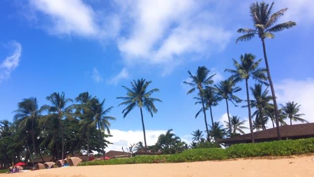 トロピカルビーチでヤシの木 - ヤシの木点の映像素材/bロール