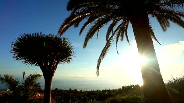 Tropical beach - Sunset video