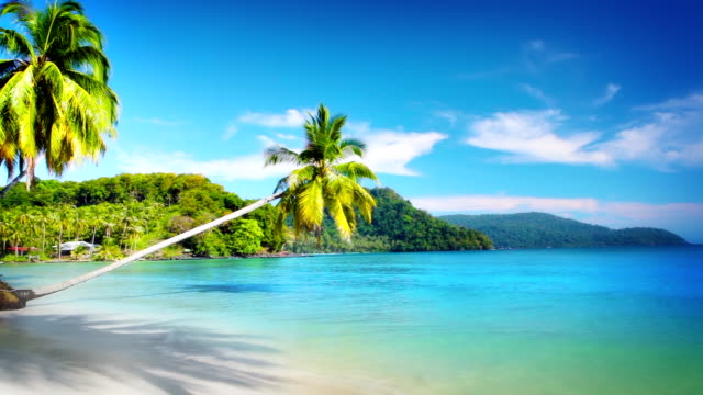Tropical beach Nature background perfection stock videos & royalty-free footage