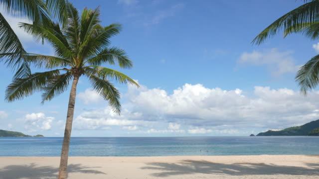 トロピカルビーチ - ヤシの木点の映像素材/bロール