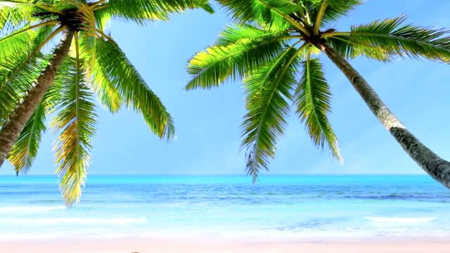トロピカルビーチ - ハワイ点の映像素材/bロール