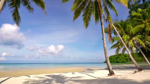 vidéos et rushes de plage tropicale avec palmiers et une eau bleue turquoise - tropical