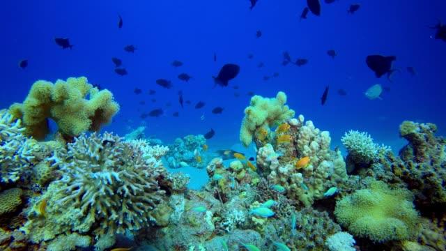 熱帶藍水五顏六色的魚。 - 氧氣筒 個影片檔及 b 捲影像