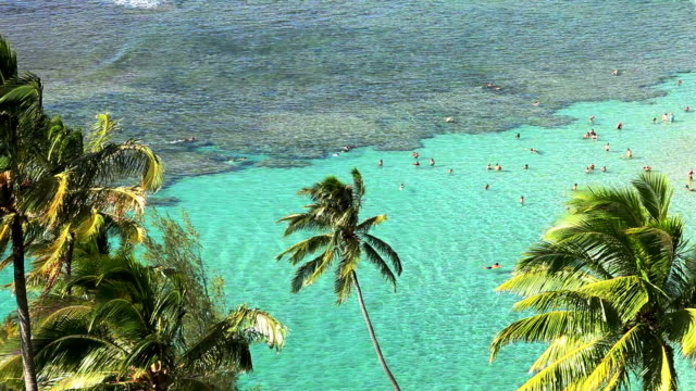 Tropical Clear Water And Palm Trees video