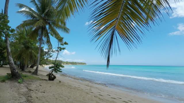 vídeos de stock, filmes e b-roll de costa tropical - baía