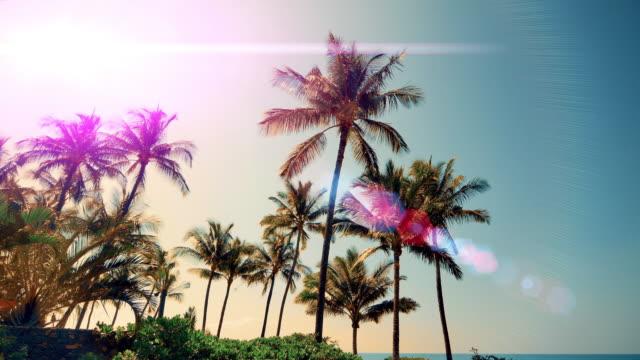 vídeos de stock e filmes b-roll de tropical coconut palm tree sky sun lens flare silhouette - califórnia