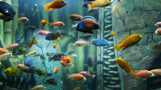 vídeos y material grabado en eventos de stock de peces tropicales coloridos en un arrecife de coral - coral cnidario