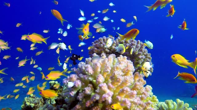 Tropical Colorful Underwater Seascape video