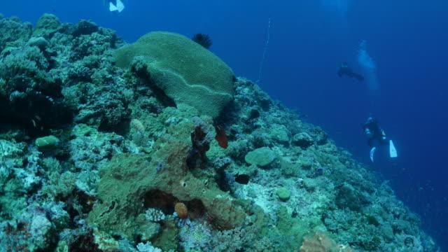 vídeos y material grabado en eventos de stock de peces tropicales, arrecifes submarinos - zona pelágica