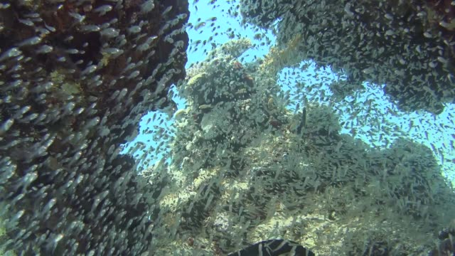 tropical coral reef scene with shoals of glassfish in cave - морская рыба стоковые видео и кадры b-roll