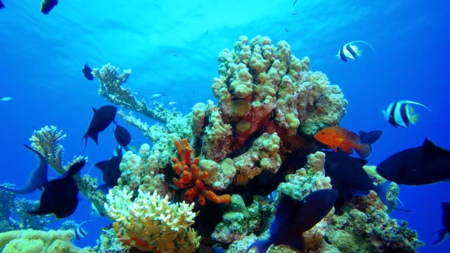 Tropical Coral Reef Seascape Tropical underwater sea fish. Colourful tropical coral reef. Scene reef.  Marine life sea world. Underwater fish reef marine. Tropical colourful underwater seascape. Underwater fish garden reef. Reef coral scene. Coral garden seascape. aquatic organism stock videos & royalty-free footage