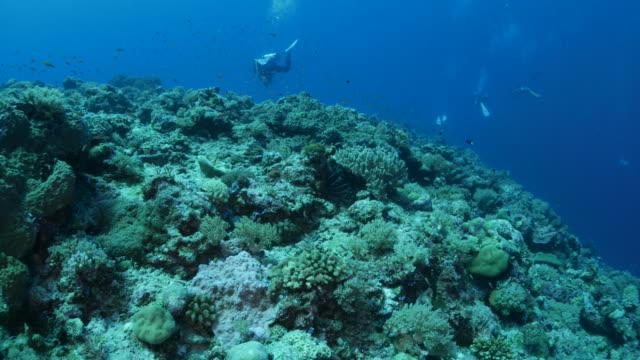 vídeos y material grabado en eventos de stock de arrecife de coral tropicales - micronesia