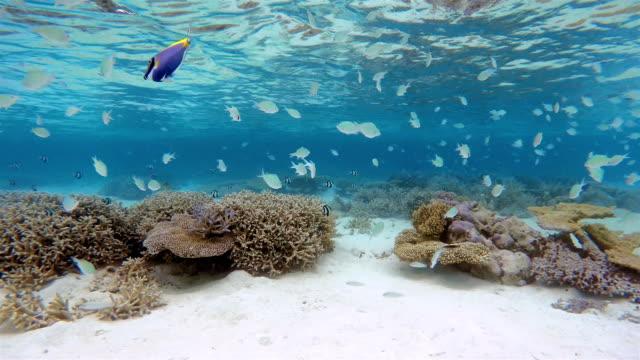 tropikalnej rafy koralowej z ryb i szkołach - 20 sekund lub dłużej filmów i materiałów b-roll