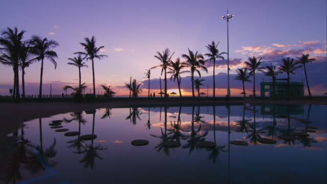 Tropical Durban early morning beach sunrise with the silhouetted palm trees. Tropical Durban early morning beach sunrise with reflection of the silhouetted palm trees in pool. natal stock videos & royalty-free footage