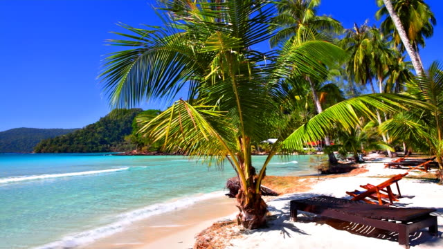 Tropical family hotel beach with palm tree and outdoor chair video