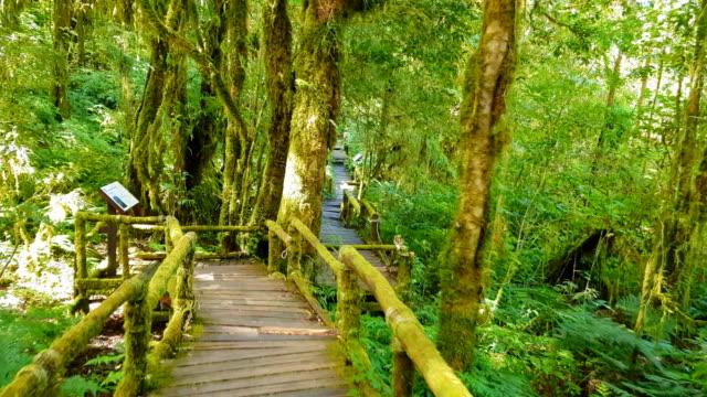 森の中の熱帯シダと樹木 ビデオ