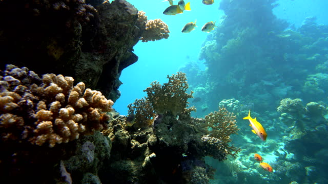 Tropical fish and coral reefs. A warm sea. Diving. video