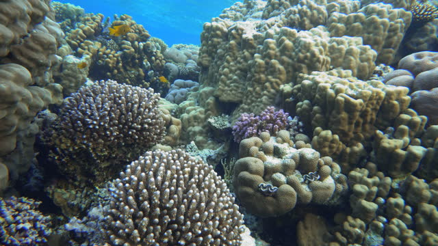 Tropical fish. Coral reef. Underwater life. video