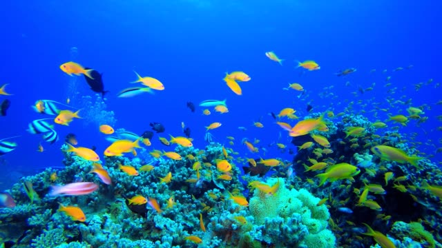 熱帶魚珊瑚礁。 - 氧氣筒 個影片檔及 b 捲影像