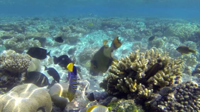 tropical fish feeding on a shallow coral reef - sky diving video stock e b–roll