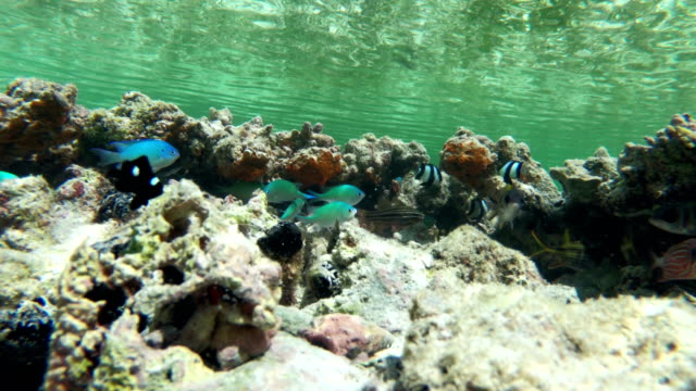 tropical fish hiding near coral - poco profondo video stock e b–roll