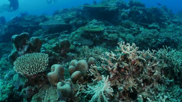 vídeos y material grabado en eventos de stock de peces tropicales en los arrecifes de coral, palau - sea life park