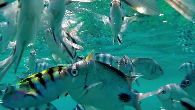 tropical fish in mauritius - isole mauritius video stock e b–roll