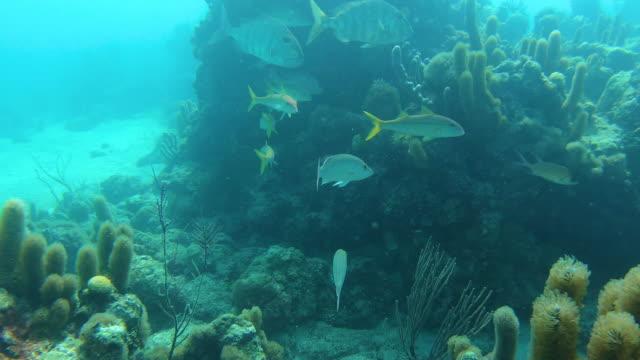 stockvideo's en b-roll-footage met tropische vissen onderwater rif turken en caicos - providenciales