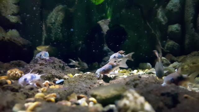 тропическая рыба - морская рыба стоковые видео и кадры b-roll