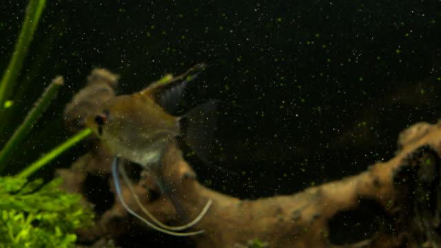 tropical fishes meet in blue coral reef sea water aquarium. underwater paradise - żabnicokształtne filmów i materiałów b-roll