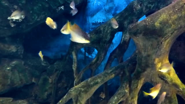 Tropical fishes swims in water in aquarium Tropical fishes swims in water in aquarium. Many colored underwater inhabitants moving in different directions. zoology stock videos & royalty-free footage