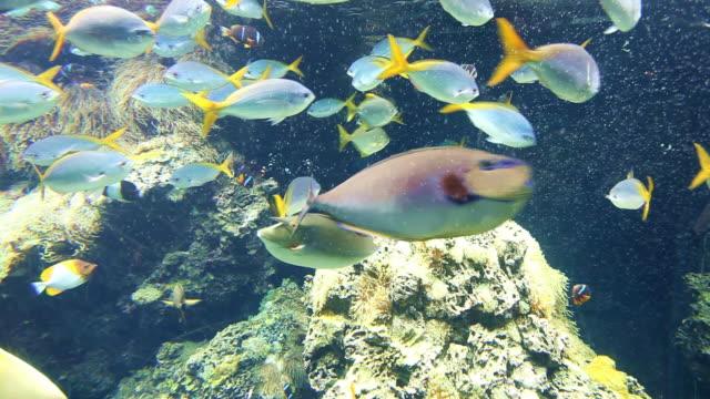 pesci tropicali - under the sea fish video stock e b–roll