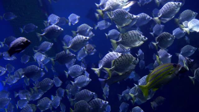 tropische fische - ichthyologie stock-videos und b-roll-filmmaterial