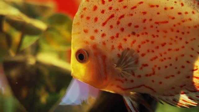 tropiska fiskar - iktyologi bildbanksvideor och videomaterial från bakom kulisserna