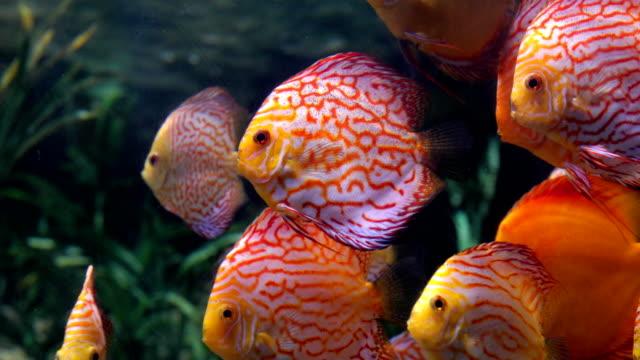 tropiska fiskar - akvarium byggnad för djur i fångenskap bildbanksvideor och videomaterial från bakom kulisserna