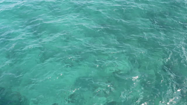 Tropical Florida Ocean Water Backdrop video