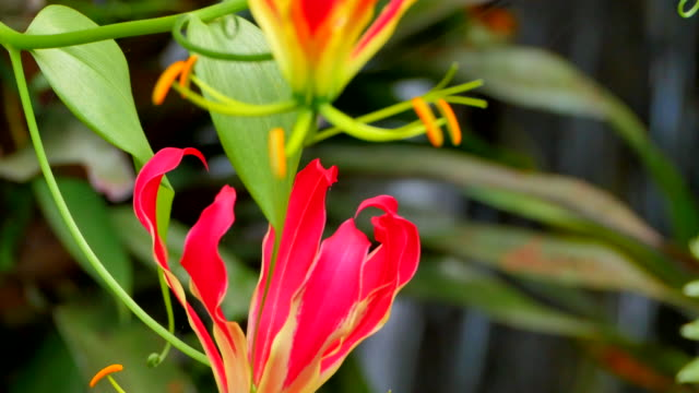 Tropical Flowers in Front of Waterfall, Close Up video
