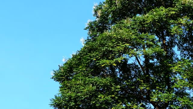 fiori tropicali sull'albero - disordine affettivo stagionale video stock e b–roll